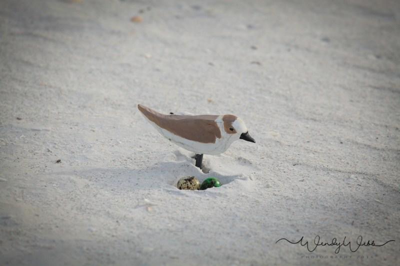Plover snowy-100