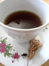 box-elder-tea-cup