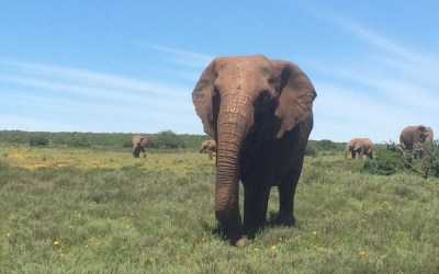 South Africa – Land of extinct and endangered species