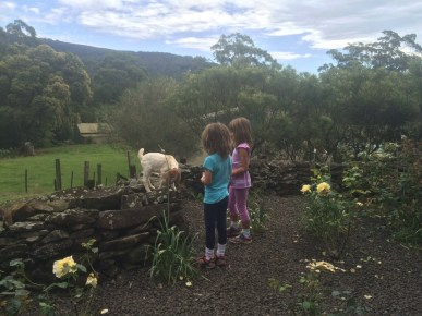 Our last farm stay in Jamberoo. The girls got to feed a bottle of milk to this 4-week old kid!