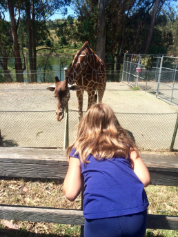 My eldest encounters a giraffe