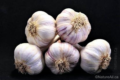 Ail Garlic - Baba Franchuk - Bulbes
