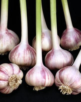 Ail Garlic - Red Rezan - Bulbes - natureail.ca