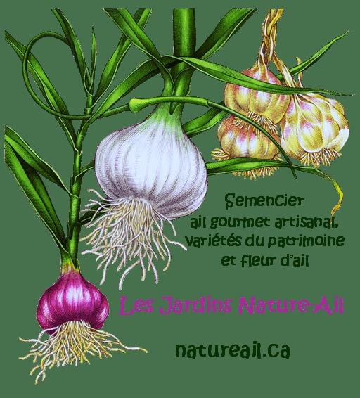 Ail du Québec Garlic - Les Jardins Nature-Ail logo 512x566comp