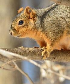 Squirrel-in-Woods-1
