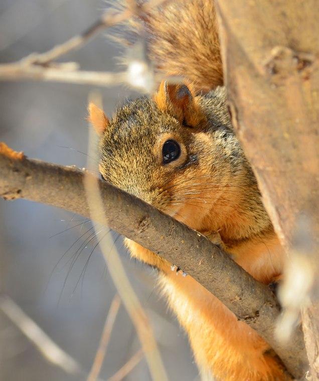 Squirrel-in-Woods-2
