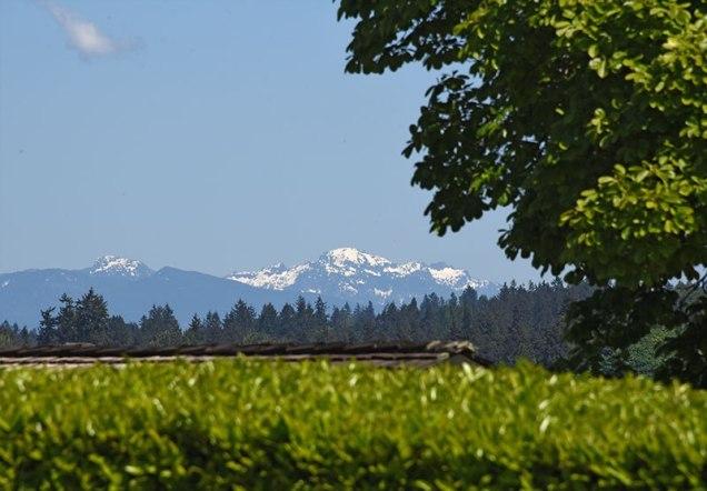 mountains-across-field