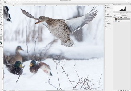 Cropping image in Photoshop.