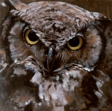 Great Horned Owl, copyright Lindsay Sandbothe