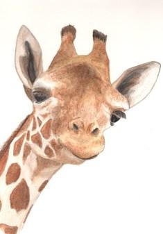 Giraffe, copyright Alice Wy