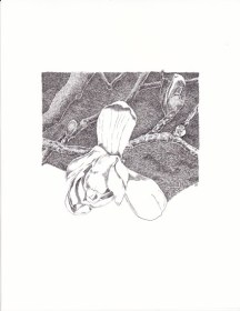 magnolia-crosshatch-copyright-nancy-thyfault