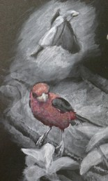 scarlet-tanagers-underpainting-color-in-process-copyright-carla-schmakel