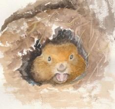 wood-chuck-watercolor-copyright-1-28-17-fran-kelly