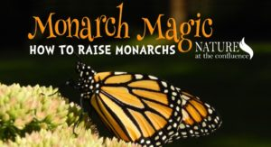 Monarch Magic: How to Raise Monarchs @ Nature At The Confluence Campus