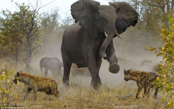 Tanzania Classic Bush Safari Adventure of Northern