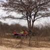 safaricampbudget