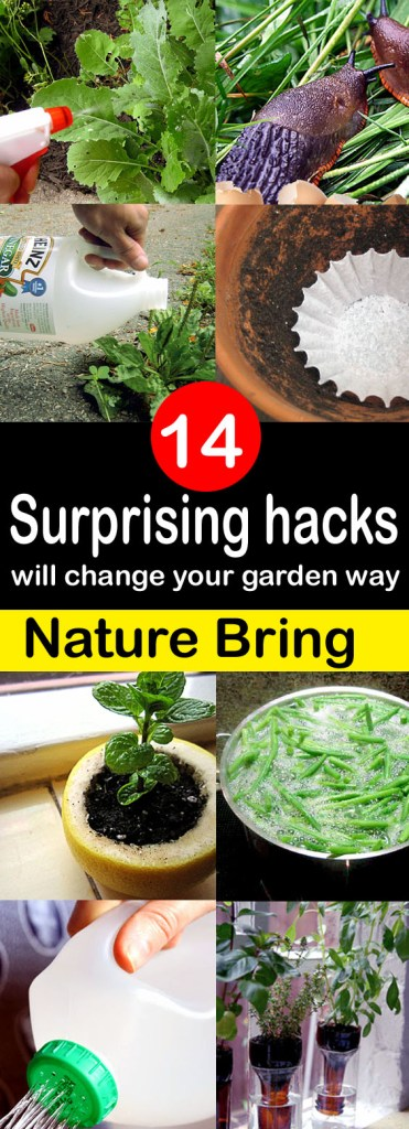 14 Gardening Hacks for pin