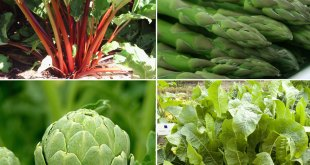 8 Perennials vegetables you can plant once and savor forever