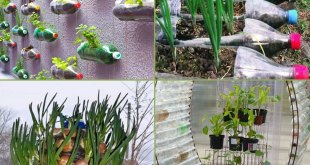 9 How to reuse DIY Plastic Bottle Garden Projects | Creative ideas