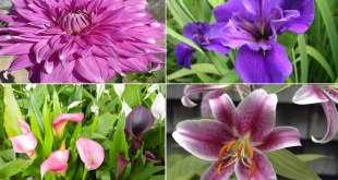 09 Summer Blooming Bulbs will make the spring feel