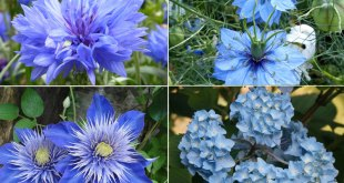Blue flowers | a cool theme for your garden