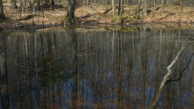 Vernal-Pool pic2