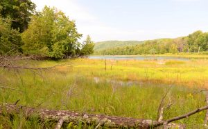 coastal_wetland_cropped