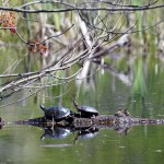 two_turtles