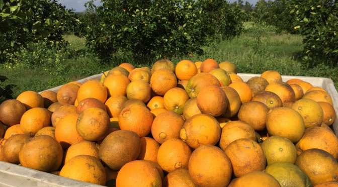 The Nature Coast Citrus Business