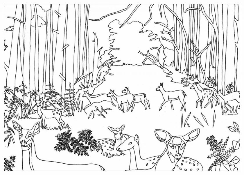 printable animals in the forest coloring page for both
