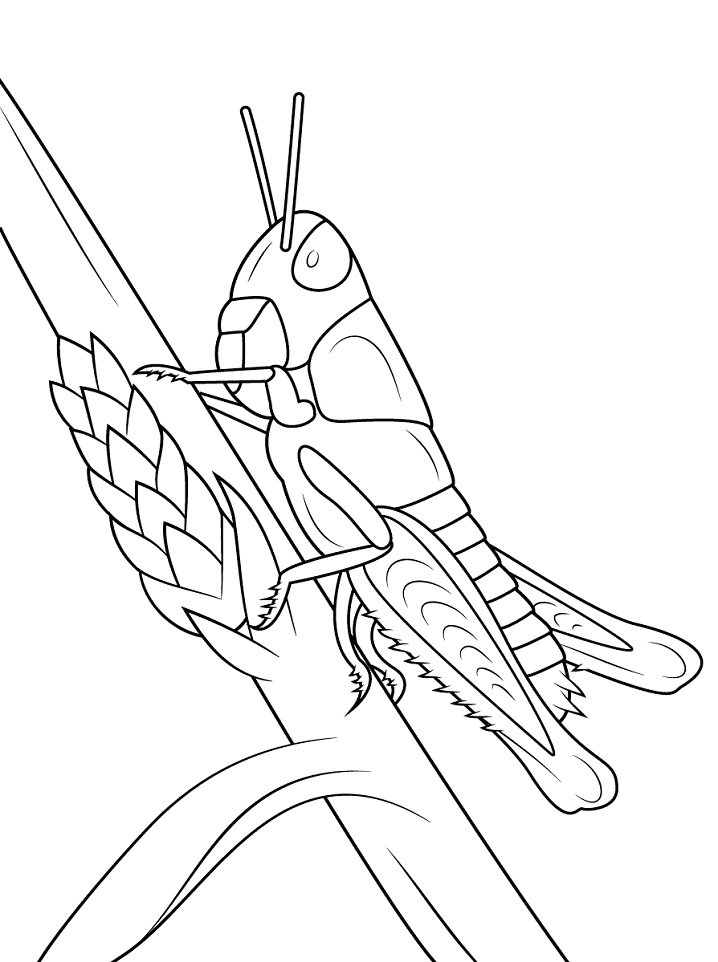 Printable Young Grasshopper coloring page for both aldults