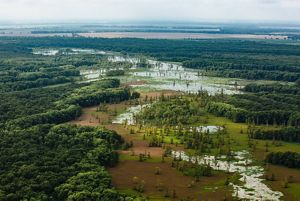 The Nature Conservancy In Mississippi