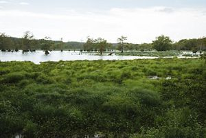 The Nature Conservancy In Mississippi Contact Us