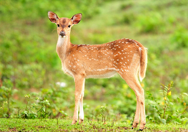 In Trouble for selling Deer Meat