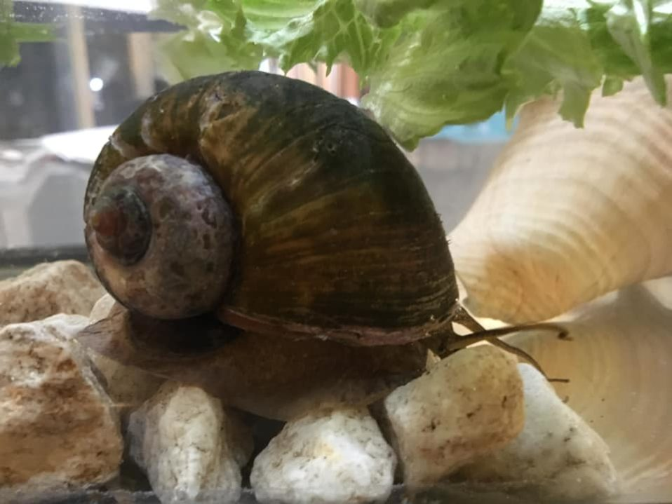 snail invasion nature discovery