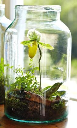 Pequeo jardn en una botella de cristal