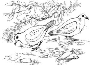 Friendly ground doves in the forest. Have some fun, download this image and color in the birds! Artist: Anne O′Brien.