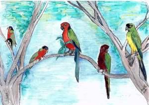 Four Fiji Parrots. Artist: Anne O'Brien.