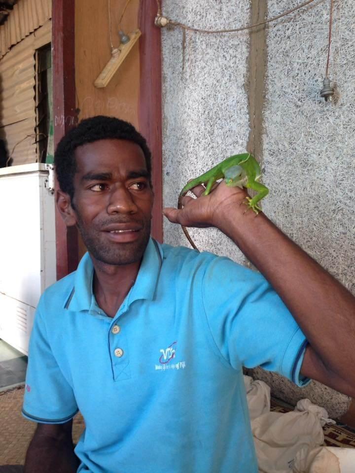 Endangered Fiji Iguana Project