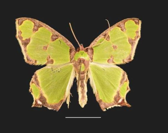 Mobilizing Fiji's macro-moth collection data to enhance knowledge and encourage biodiversity protection