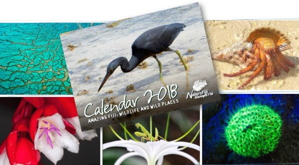 Send us your best pictures for  2019 NatureFiji-MareqetiViti Calendar