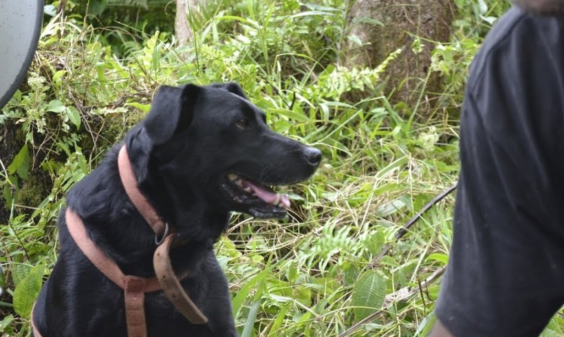 Tar (Wildlife Detector Dog)