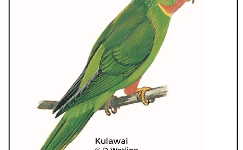Birds in Fiji's Forests: Kulawai