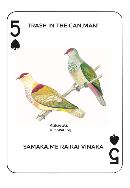 Birds in Fiji's Forests: Kuluvotu
