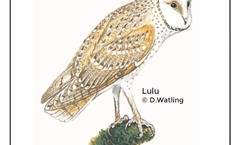 Birds in Fiji's Forests: Lulu