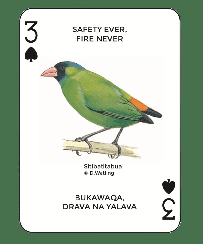 Birds in Fiji's Forests: Sitibatitabua