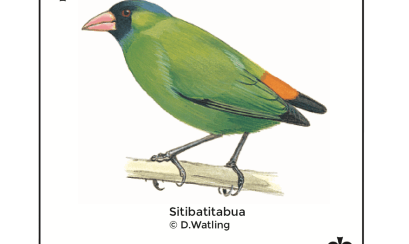 Birds in Fiji's Forests: Sitibatitabua