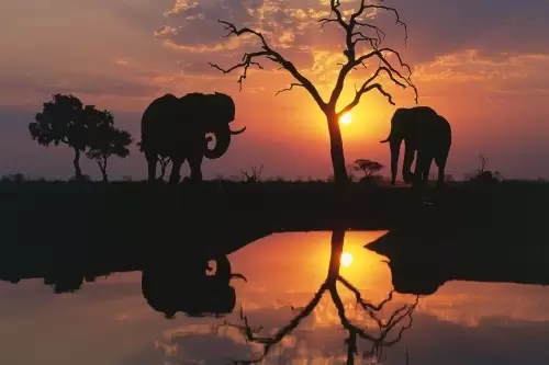 Savuti Elephants at Sunset