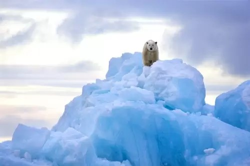 Polar bear on top of blue iceberg