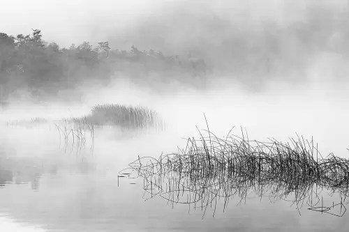 Small lake in early morning fog